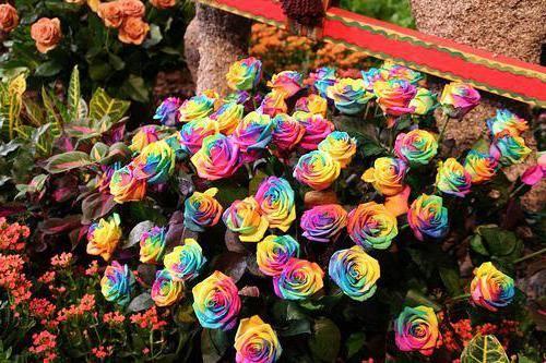 Самые лучшие розы