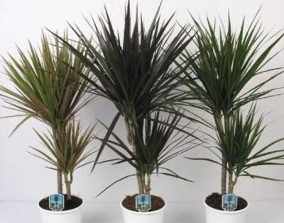 Плант микс растение