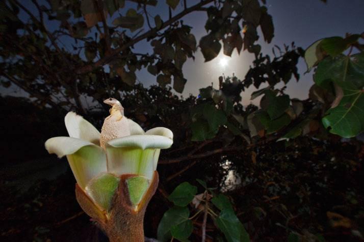 Цветок который цветет ночью
