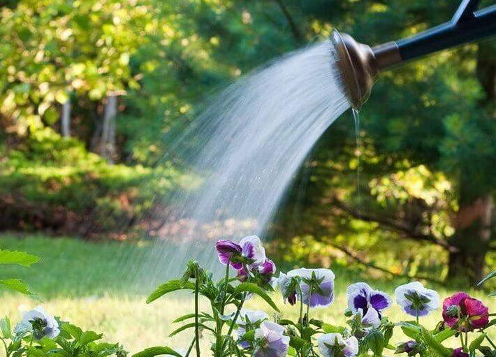 Подкормка цветов янтарной кислотой