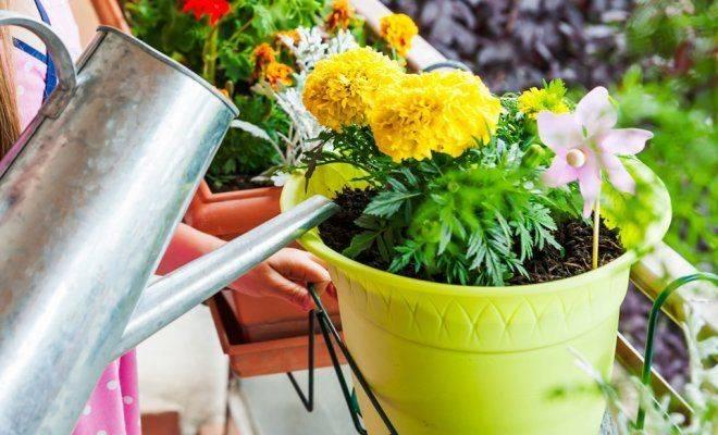 Можно ли поливать цветы кипяченой водой