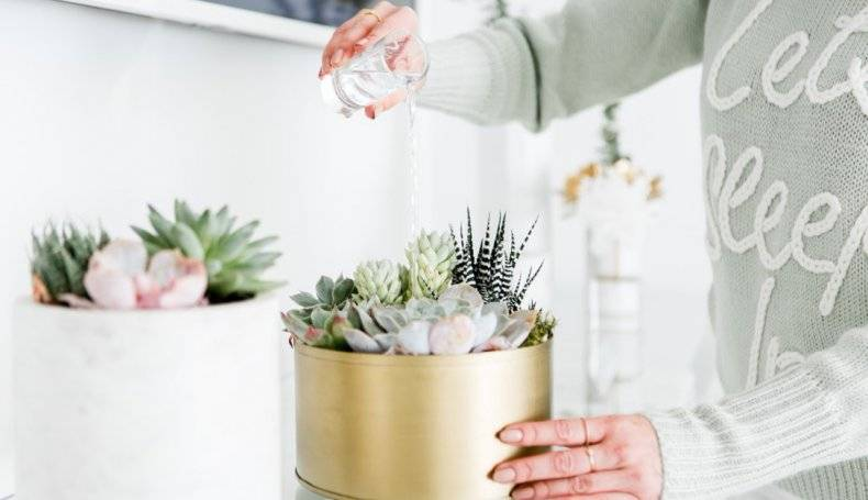 Суккуленты как поливать
