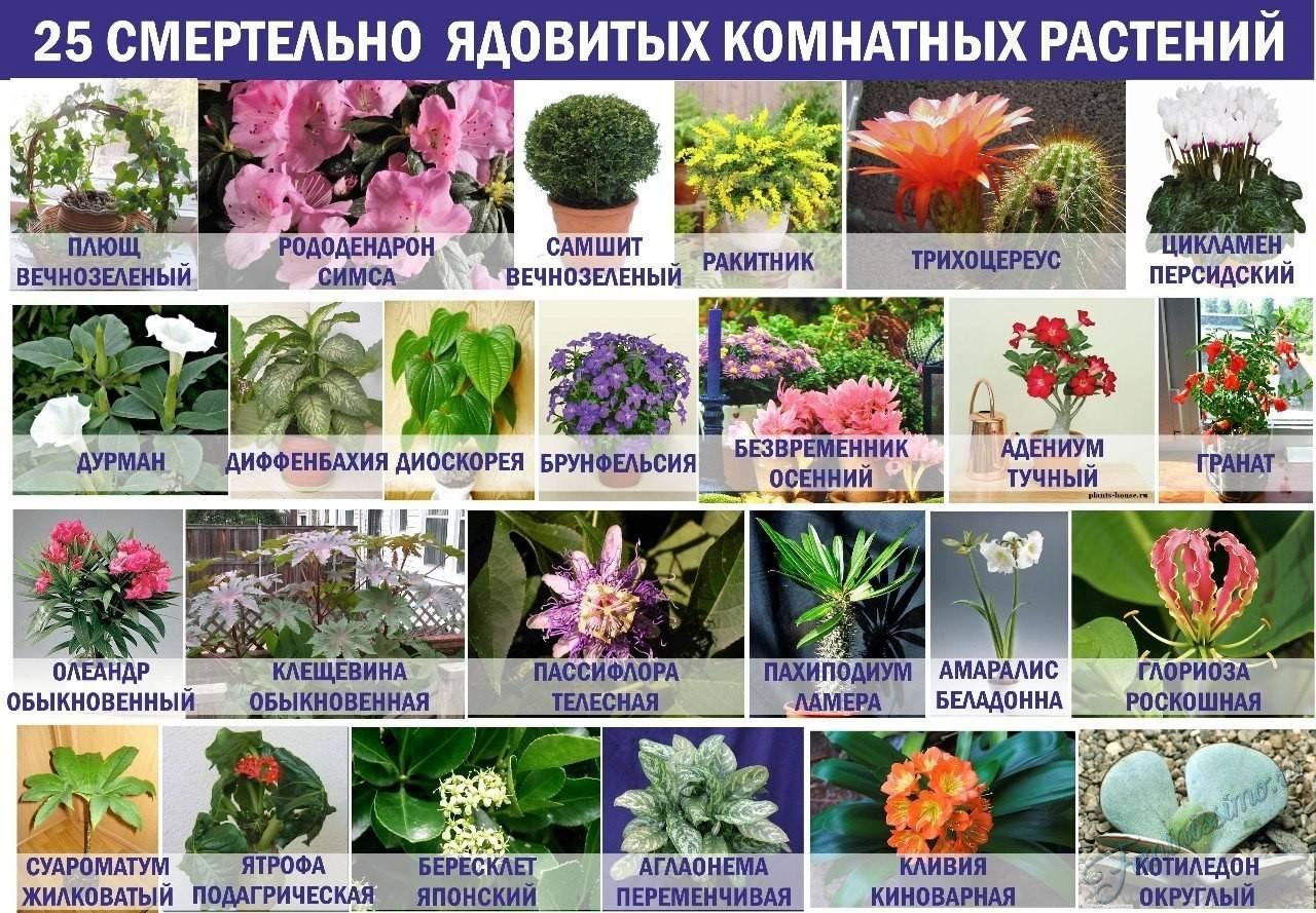 Какие цветы можно