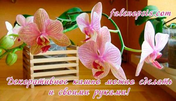 Обязательно ли сажать орхидею в прозрачный горшок