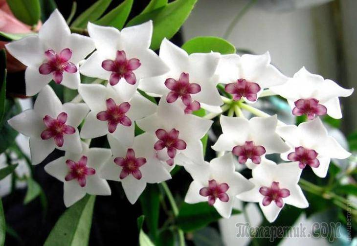 Удобрения для цветущих комнатных растений