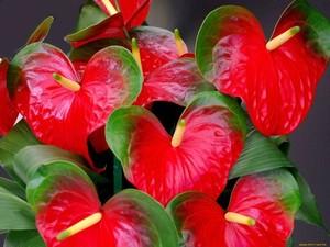 Цветы каллы: описание видов и характеристика похожих растений