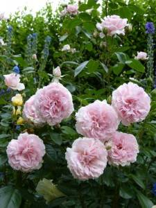 Роза принцесса александра люксембургская