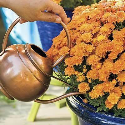 Удобрения для роста растений