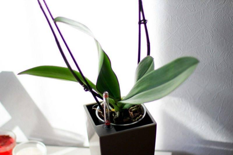 Что нужно сделать чтобы орхидея зацвела