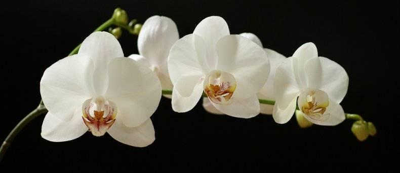 Вазон для орхидей