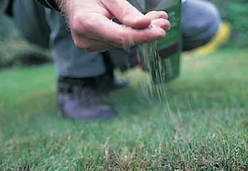 Когда лучше сажать газон