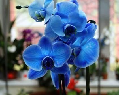 Уход за орхидеями в горшке