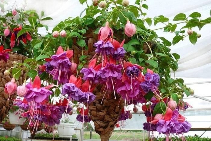 Непривередливые комнатные цветы