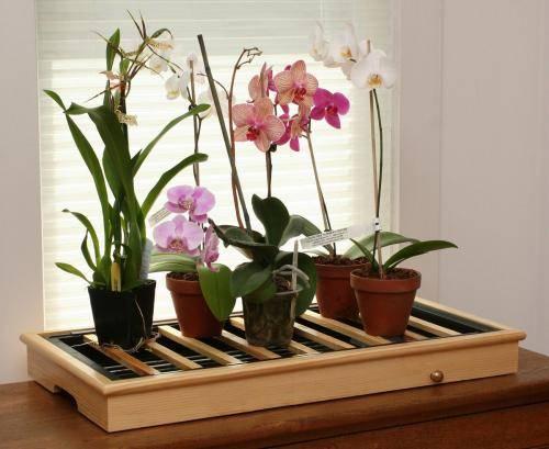 Пожелтел стебель орхидеи что делать