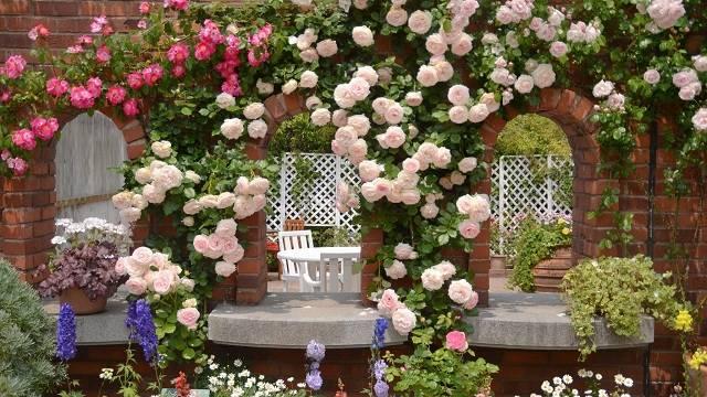 Черные пятна на розах