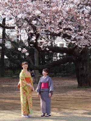 Что такое сакура в японии