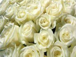 Когда дарят белые розы что это значит