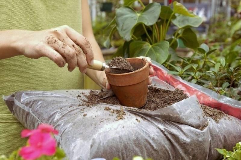 Подкормка растений янтарной кислотой