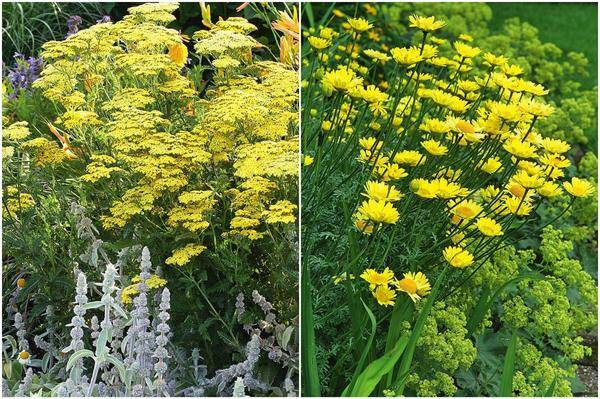 Растения с желтыми цветами