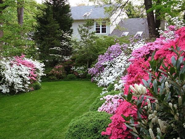 Азалия выращивание и уход в саду