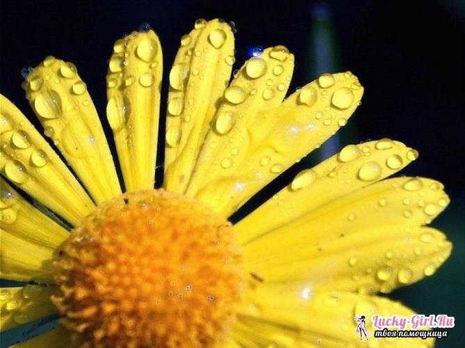 5c1bdebcbabc65c1bdebcbac11 Желтые маленькие цветочки название — Все цветы