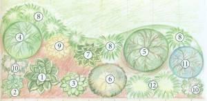 Какие растения посадить в тени за домом