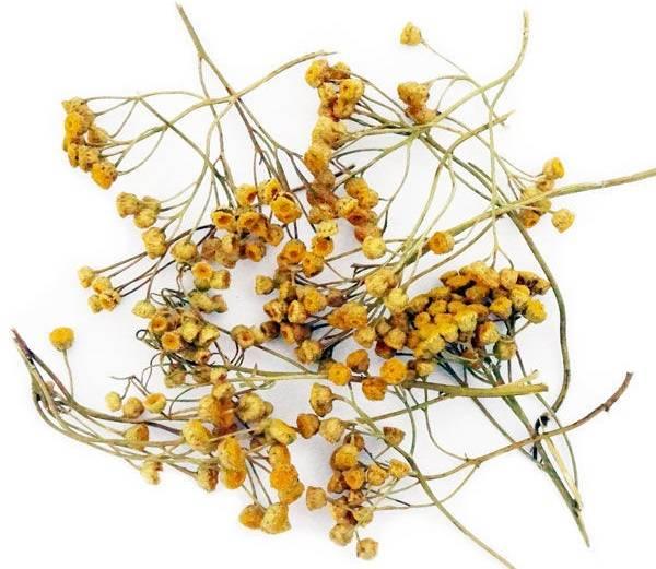 Цветы пижмы лечебные свойства