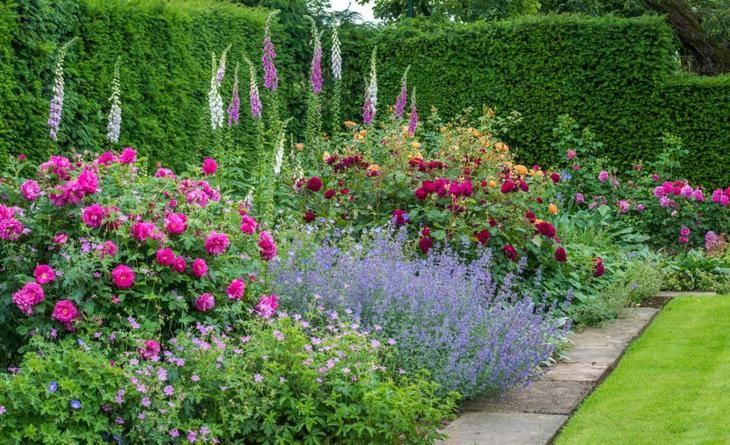 Садовый пахучий цветок