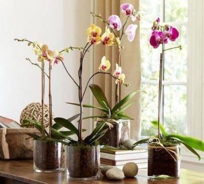Орхидеи в стекле