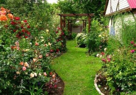 Роза ландшафтная