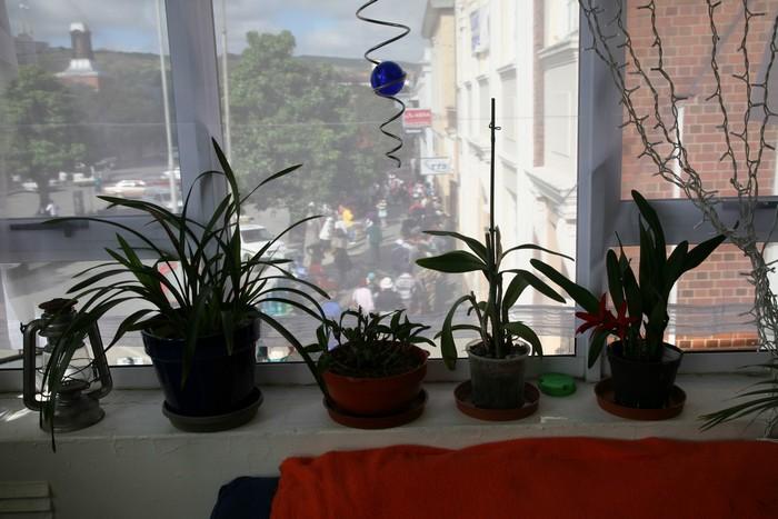 Почему орхидея не цветет а листья растут