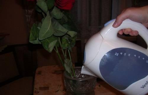 Что добавить в воду для роз