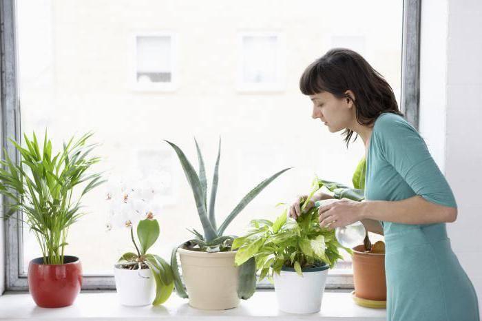 Мушки в земле комнатных растений как избавиться