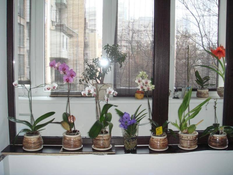 У орхидеи опали все листья что делать