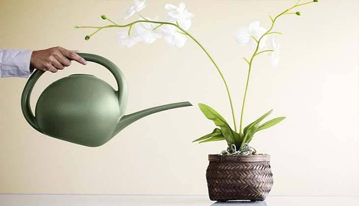 Как обновить орхидею