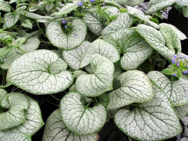 Растение с белыми цветами