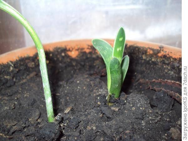 Как выращивать суккуленты дома