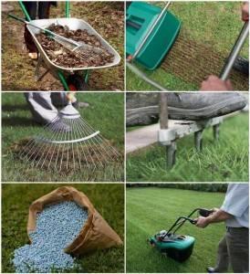 Когда нужно сажать газонную траву