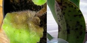 Маленькие белые червячки в земле комнатных растений