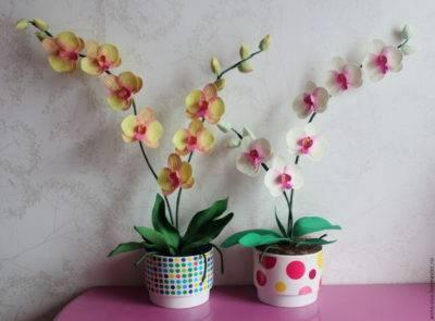 У орхидеи сгнили все корни что делать