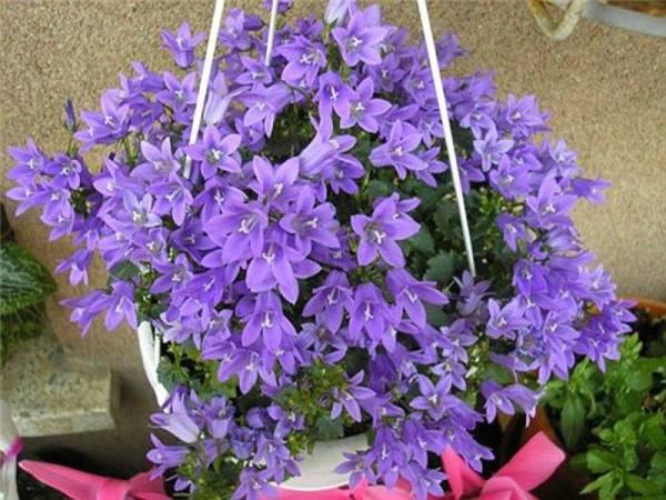 Свисающие цветы