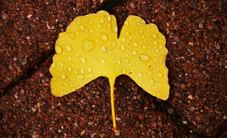 Почему желтеют цветы