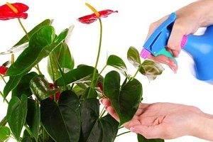 Цветок похожий на женское счастье