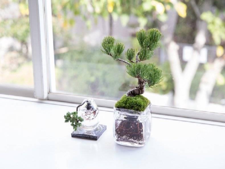 Мини дерево