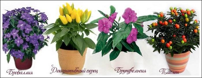 Ядовитые комнатные цветы