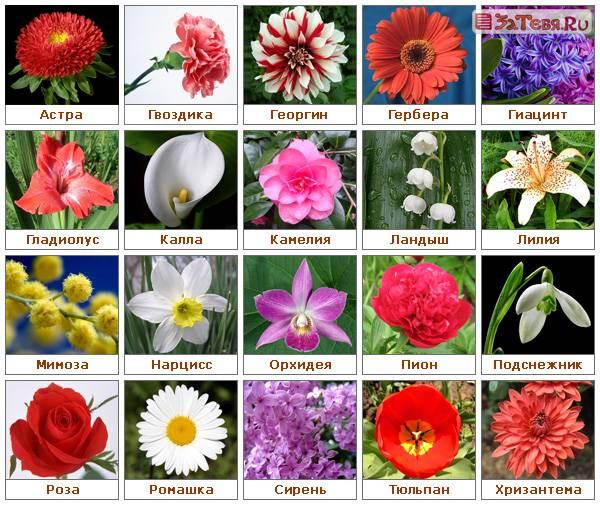 Цветы картинки с названиями, статус ватсапе