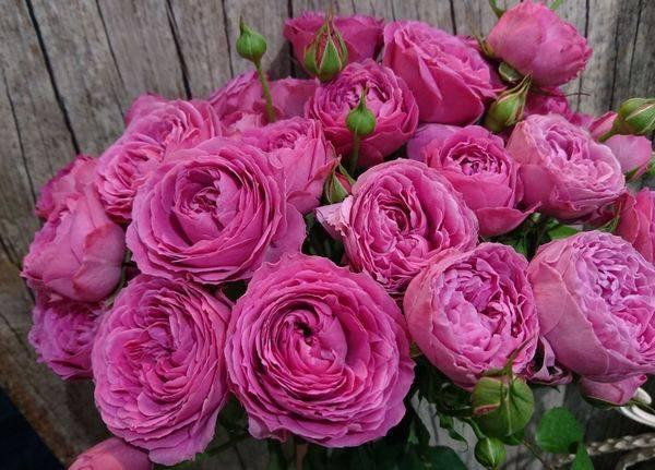 Желтые пионовидные розы