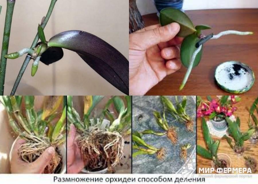 Как ухаживать за орхидеями в домашних условиях