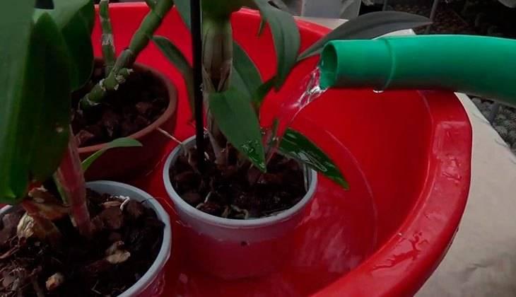 Липкие листья у орхидеи причины