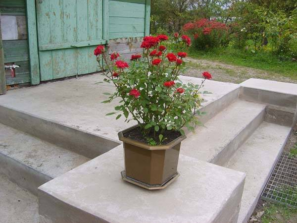 Зимнее укрытие для роз